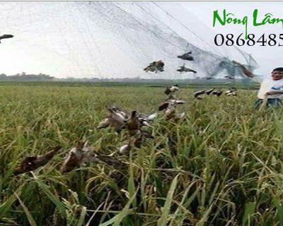 Lưới bẫy chim tàng hình Thái Landata-cloudzoom =